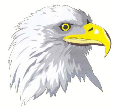 How to Draw Eagles Tutorial