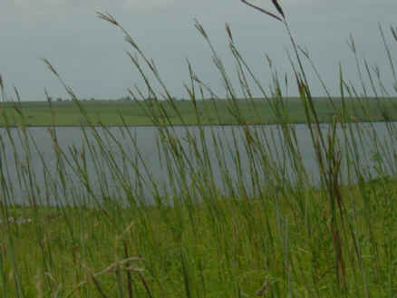 Big Bluestem grass at Yates Center Reservoir