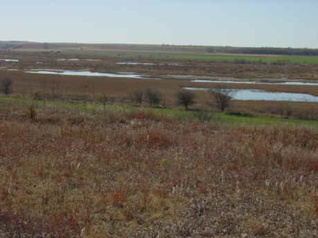 Bluewing marsh