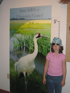 How do you measure up to a Whooping Crane?