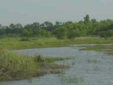 Slate Creek Wetland