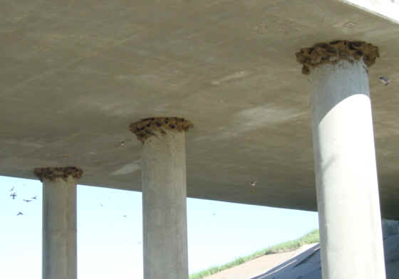 Bridge with nests